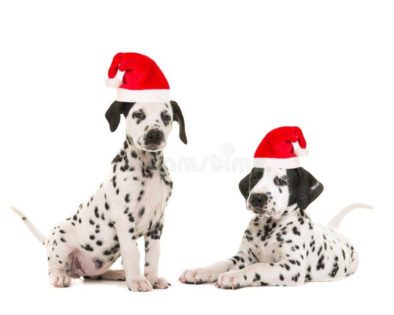 Śliczny dalmatian szczeniaka ` s jest ubranym Santa ` s kapelusz obrazy stock