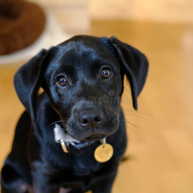 Śliczny domowy pies obrazy stock