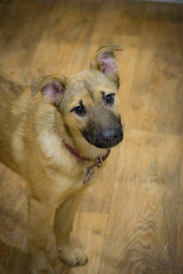 Śliczny dziecko pies z smutnymi oczami obraz royalty free