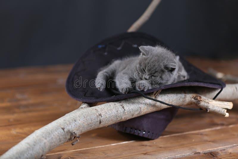 Śliczny figlarki dosypianie w czarnym kapeluszu obrazy royalty free