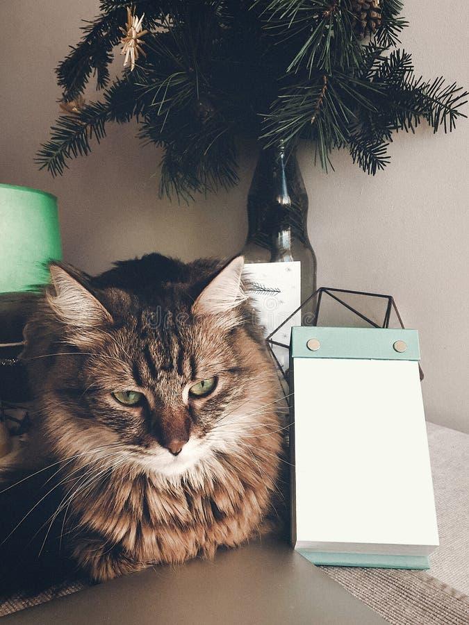 Śliczny gniewny kota obsiadanie na stole przy pustymi notatkami Przestrzeń dla teksta obrazy stock