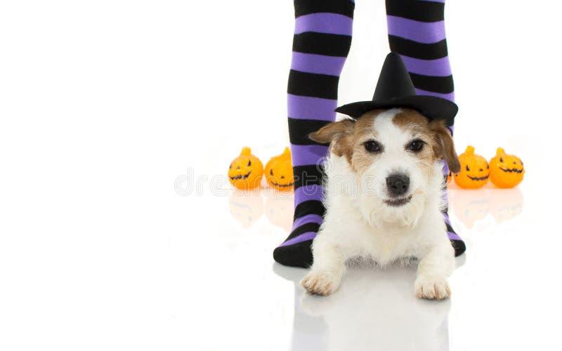 ŚLICZNY HALLOWEEN psa czarownika LUB czarownicy KAPELUSZOWY ŁGARSKI puszek Z ŚMIESZNYM FA zdjęcie stock