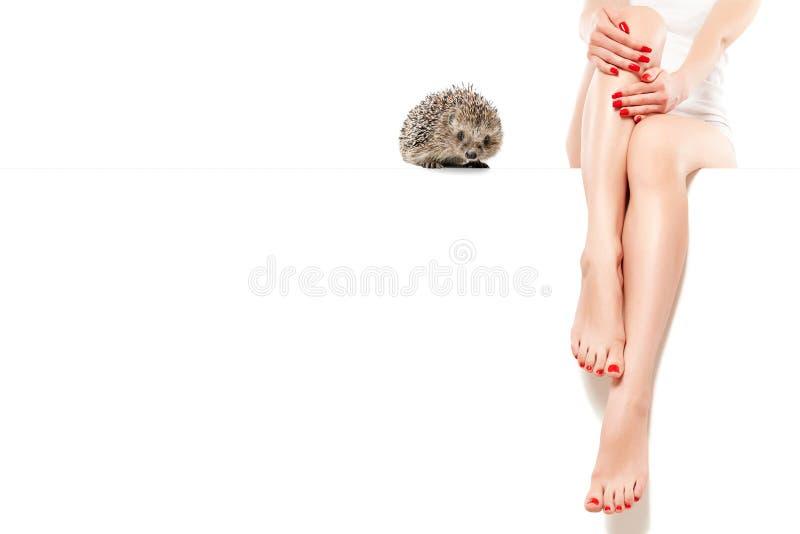 Śliczny jeż blisko pięknej szczupłej kobiety iść na piechotę obsiadanie przy sztandarem zdjęcie stock