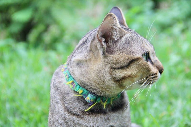 Śliczny kot żadny 1 obrazy royalty free