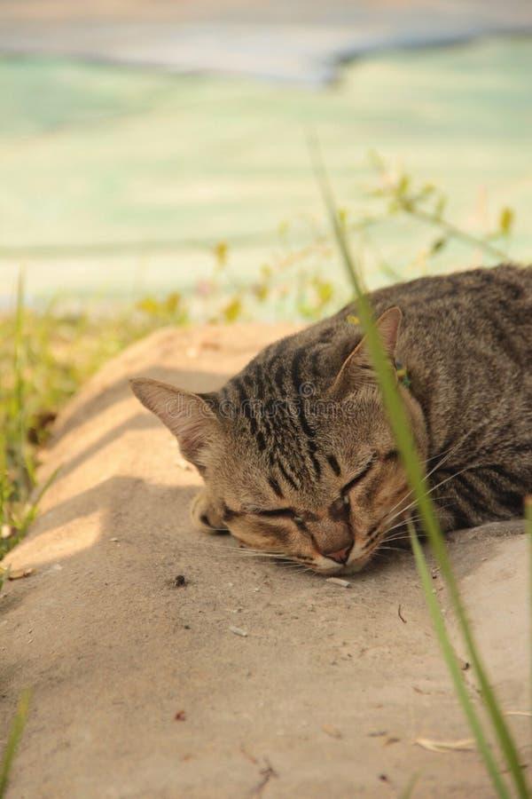 Śliczny kot żadny 3 zdjęcie royalty free