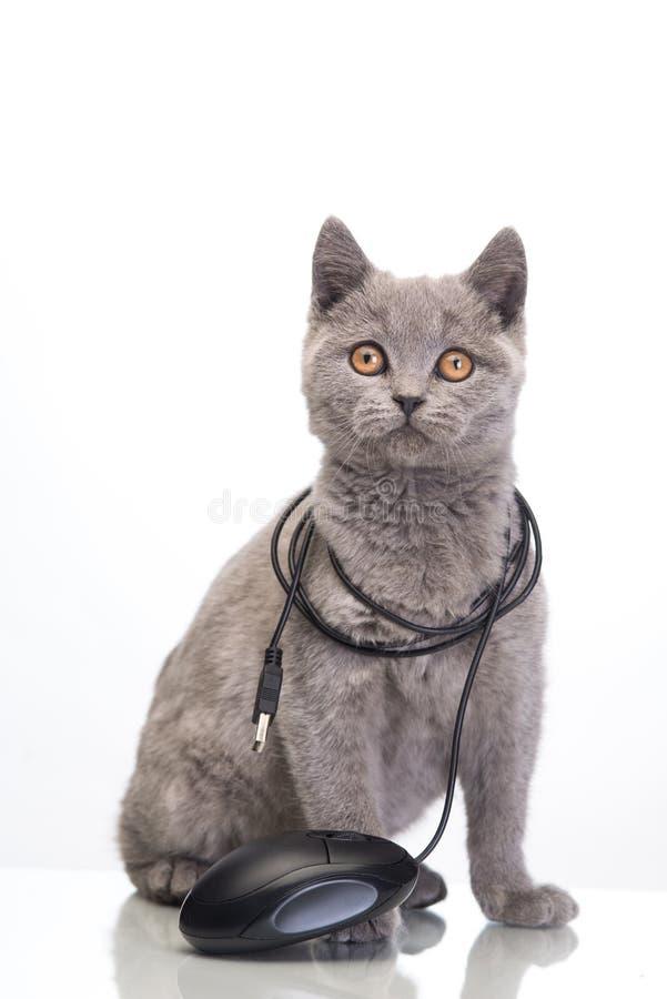 Śliczny kot obrazy stock