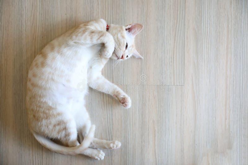 Śliczny kot relaksuje sen fotografia royalty free