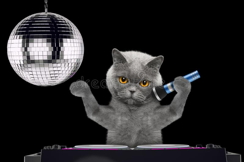 Śliczny kota śpiew z mikrofonem karaoke piosenka w noc klubie -- odizolowywający na czerni fotografia stock