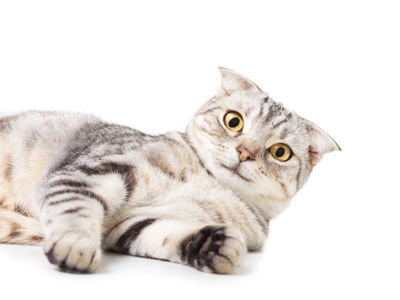 Śliczny kota lying on the beach na podłoga Nad białym tłem obrazy royalty free