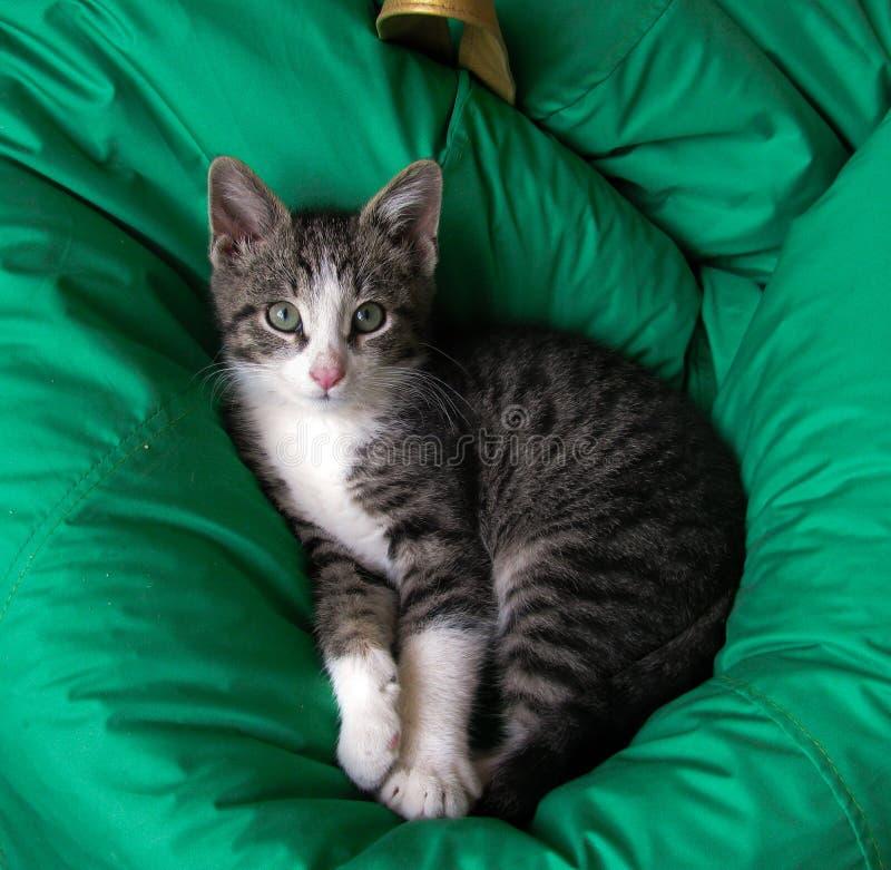 Śliczny kota lying on the beach na zielonej poduszce obrazy royalty free