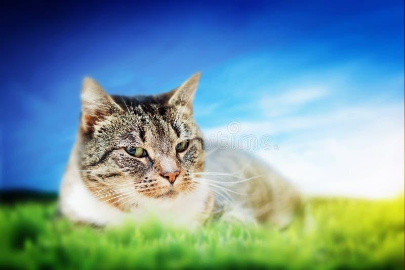 Śliczny kota lying on the beach na zielonej wiosny trawie zdjęcie royalty free