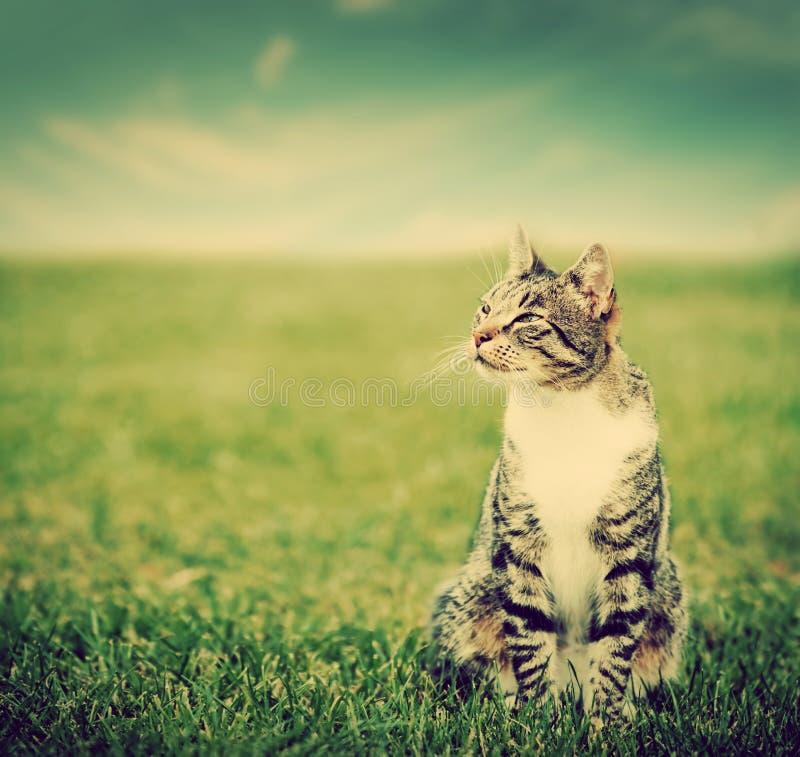 Śliczny kota obsiadanie na zielonej wiosny trawie zdjęcie royalty free