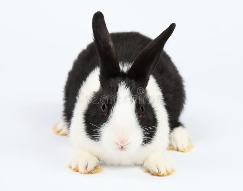 Śliczny królik zdjęcie stock