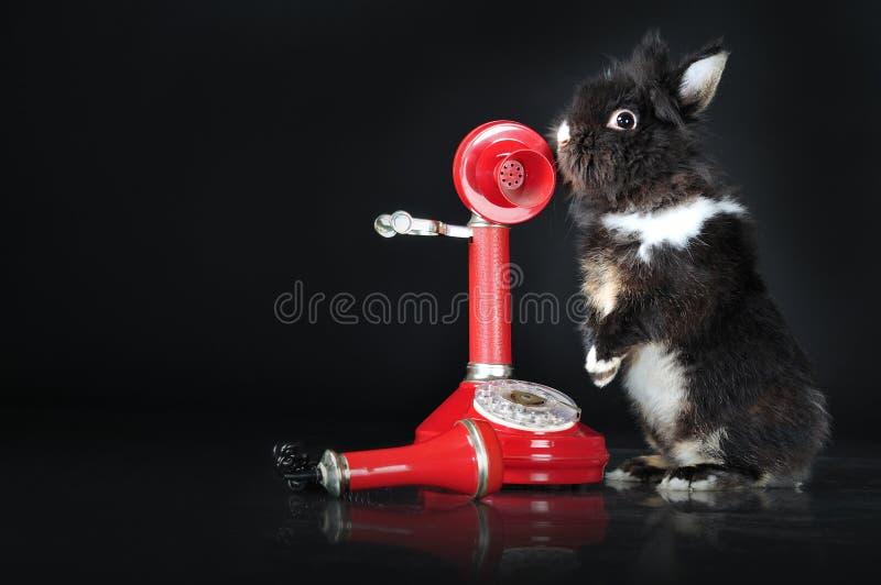 Śliczny królik opowiada na retro telefonicznym studiu odizolowywającym fotografia stock