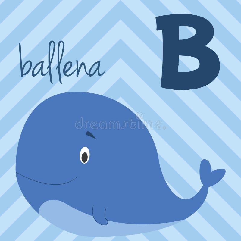 Śliczny kreskówka zoo ilustrował abecadło z śmiesznymi zwierzętami Hiszpański abecadło: B dla Ballena royalty ilustracja