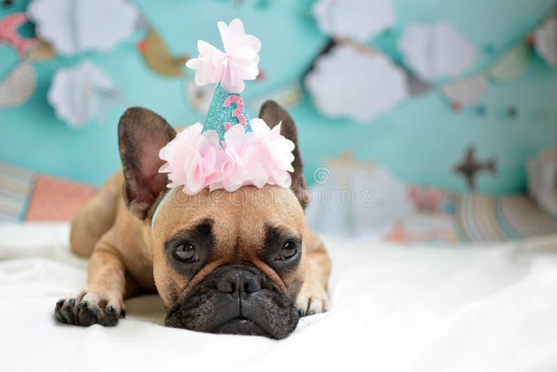 Śliczny lying on the beach źrebięcia Francuskiego buldoga pies z urodzinowym kapeluszem obrazy royalty free