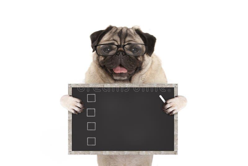 Śliczny męski mopsa psa szczeniak trzyma up pustą listę kontrolną na blackboard z czeków pudełkami rysującymi z kredą zdjęcie stock