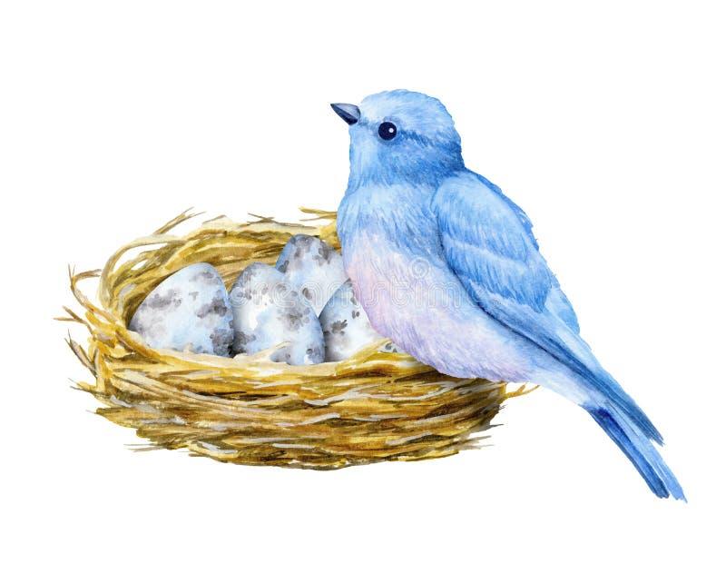 Śliczny mały błękitny ptak z gniazdowymi i błękitnymi jajkami beak dekoracyjnego latającego ilustracyjnego wizerunek swój papiero ilustracja wektor