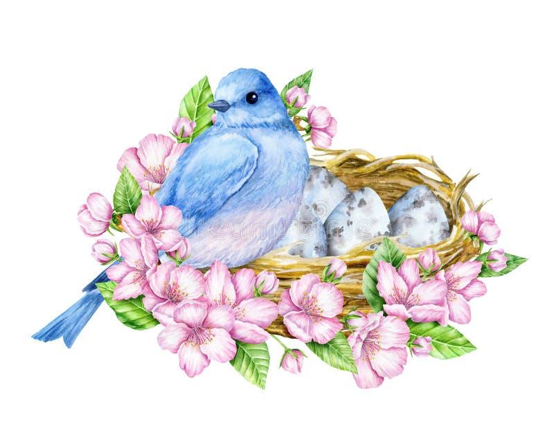 Śliczny mały błękitny ptak z gniazdowymi i błękitnymi jajkami beak dekoracyjnego latającego ilustracyjnego wizerunek swój papiero royalty ilustracja