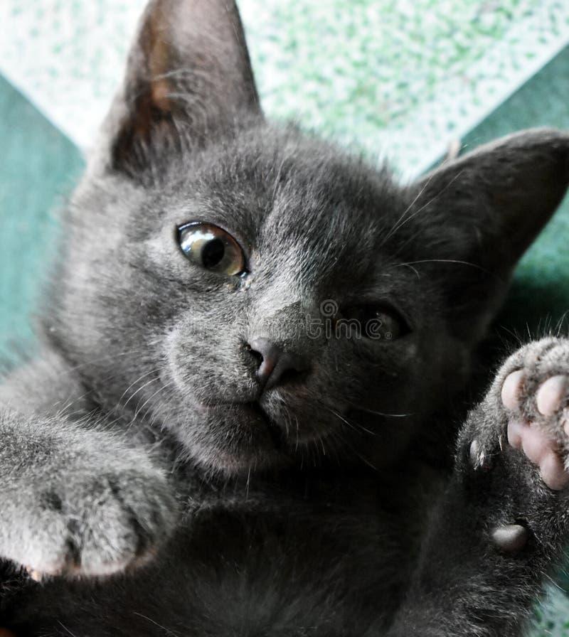 Śliczny mały czarny kot bawić się na podłodze fotografia royalty free