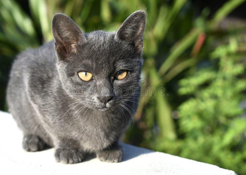 Śliczny mały czarny kot siedzi na ścianie fotografia royalty free