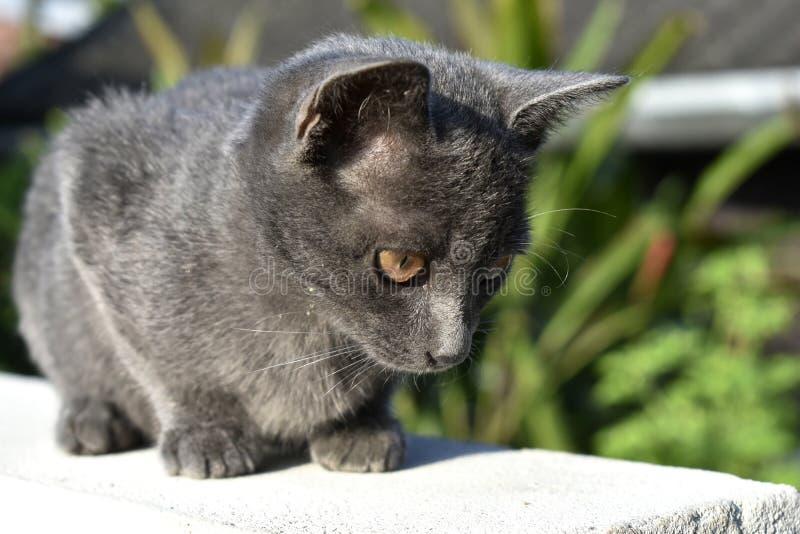 Śliczny mały czarny kot siedzi na ścianie zdjęcia royalty free