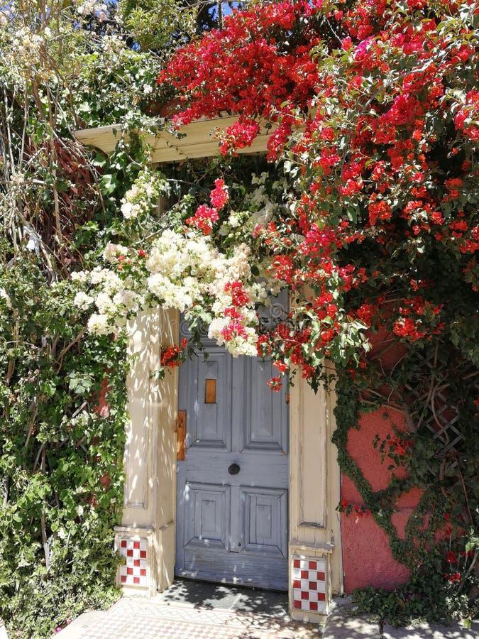 Śliczny mały drzwi zdjęcia royalty free