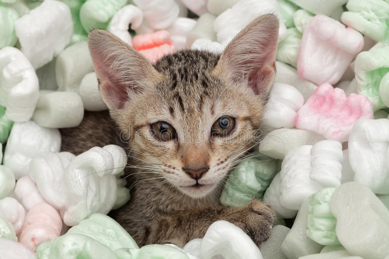 Śliczny mały kot obrazy stock