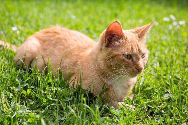Śliczny mały kot na gazonie obraz stock