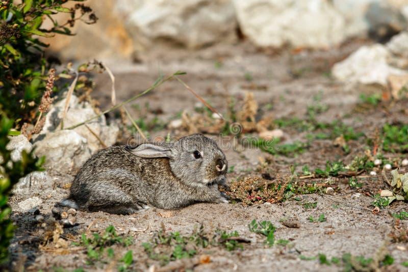 Śliczny mały królika odprowadzenie w jardzie obrazy stock