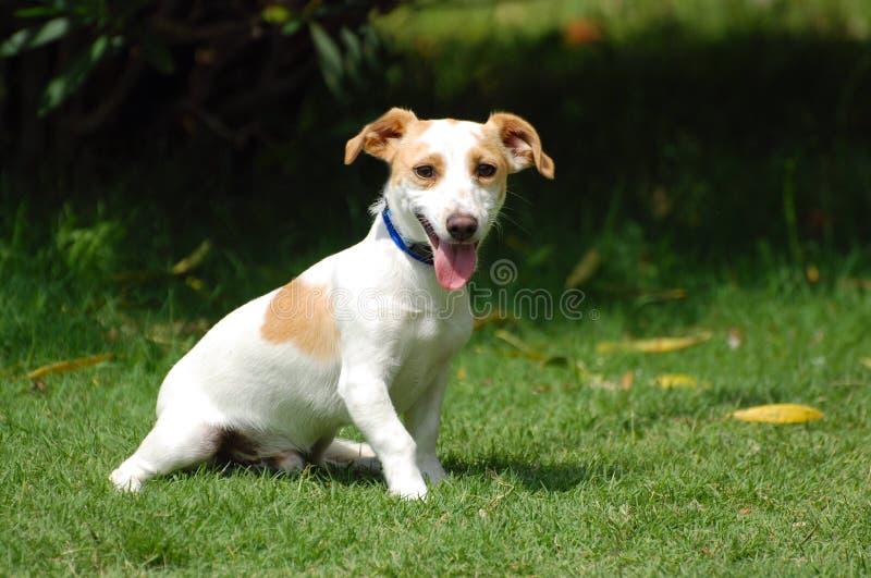 Śliczny mały pies obrazy royalty free