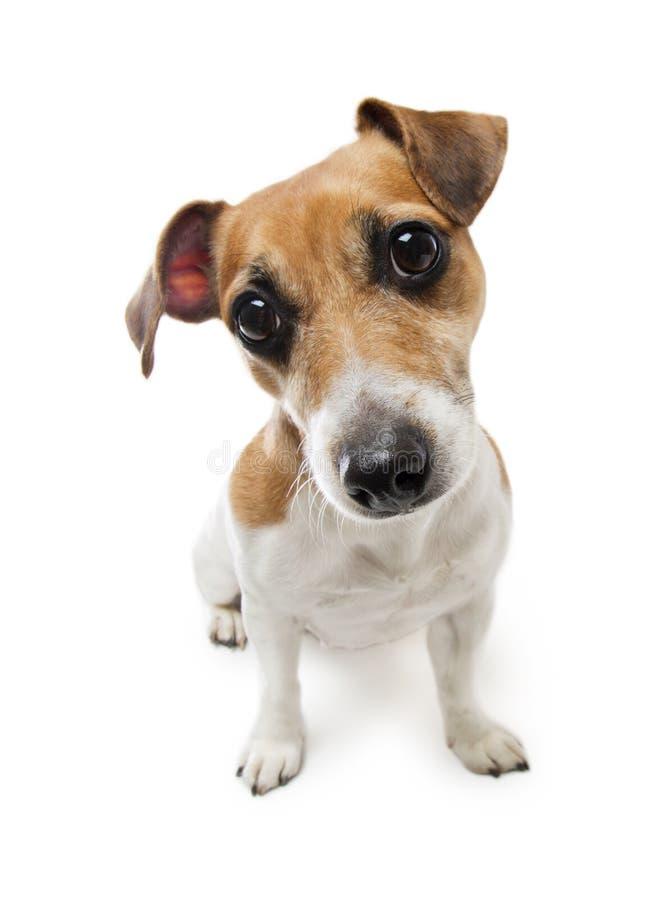 Śliczny mały pies zdjęcia royalty free
