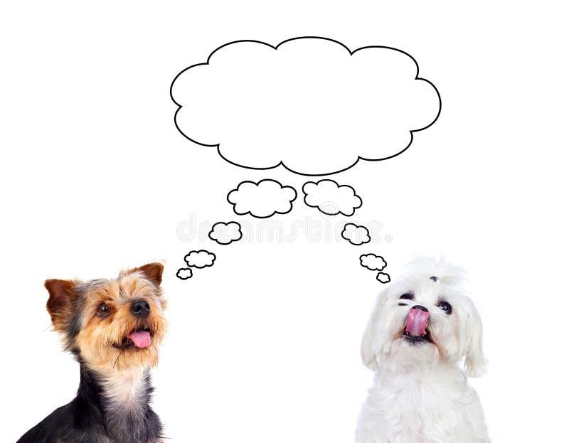 Śliczny mały psów myśleć obrazy royalty free