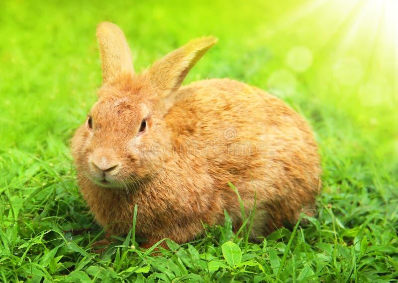 Śliczny Mały Wielkanocny królik w łące. obraz royalty free