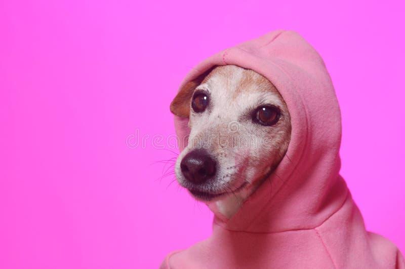Śliczny mały zima pies na menchiach fotografia stock