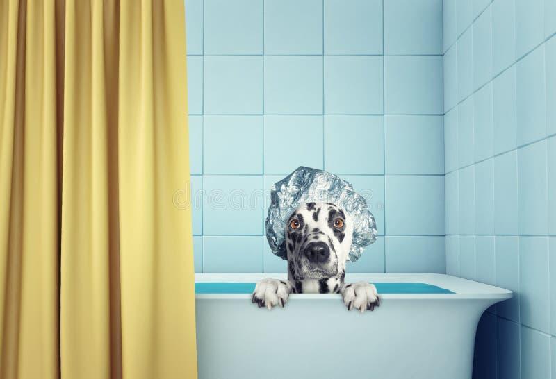 Śliczny moczy psa w skąpaniu zdjęcia royalty free