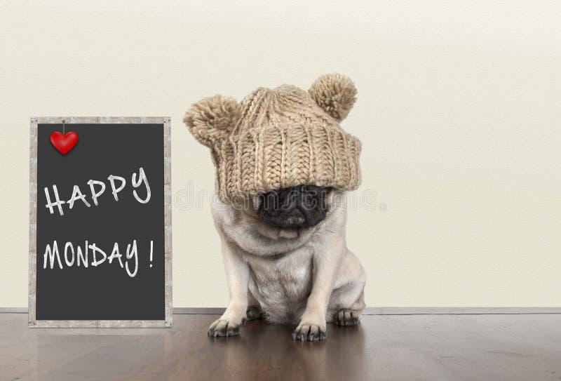 Śliczny mopsa szczeniaka pies z złym poniedziałek rano nastrojem, siedzi obok blackboard znaka z tekstem szczęśliwy Poniedziałek, zdjęcia royalty free