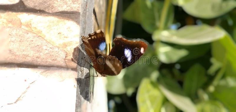 Śliczny motyl obok mojego domu. fotografia stock