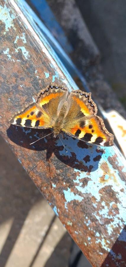 Śliczny motyl obok mojego domu. fotografia royalty free