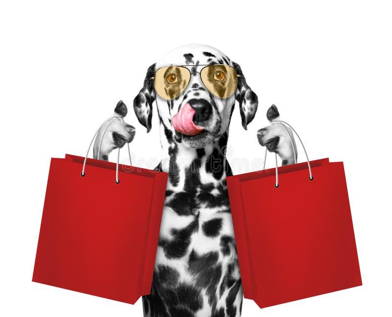 Śliczny pies iść robić zakupy zdjęcia stock