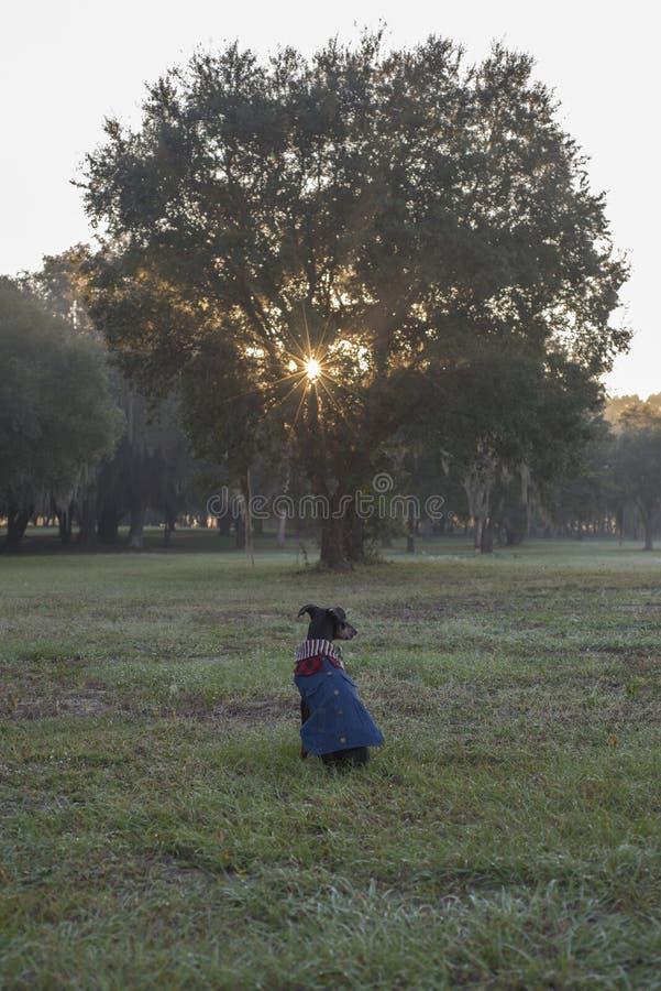 Śliczny pies ogląda wschód słońca przez liści drzewo obrazy stock