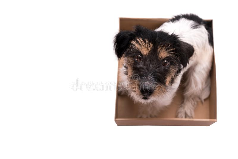 Śliczny pies siedzi w pudełku i jest przyglądający w górę zdjęcie stock