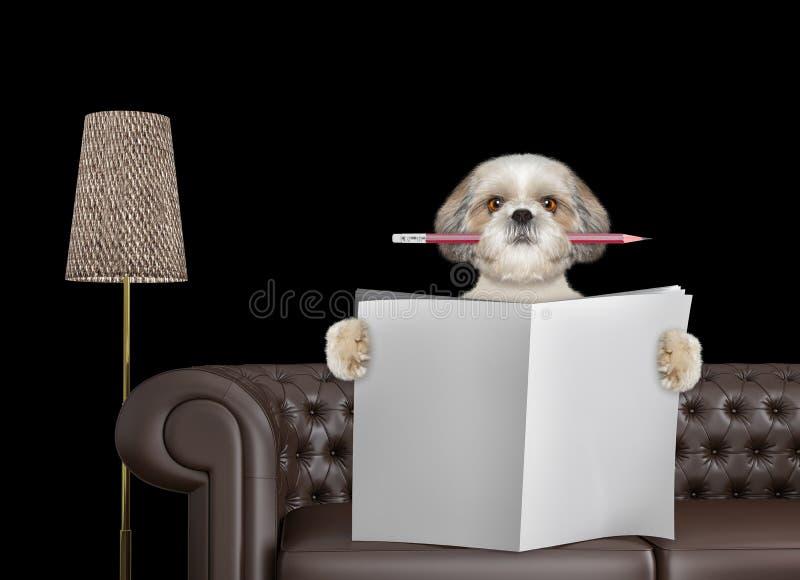 Śliczny pies z ołówkową czytelniczą gazetą z przestrzenią dla teksta na kanapie w żywym pokoju Odizolowywający na czerni obraz stock
