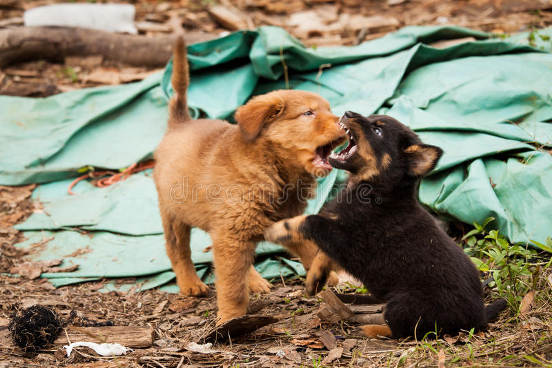 Śliczny przybłąkany szczeniaków bawić się obrazy royalty free