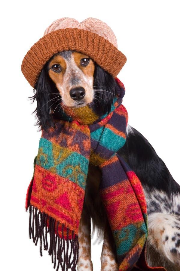 śliczny psi kapeluszowy portret fotografia stock
