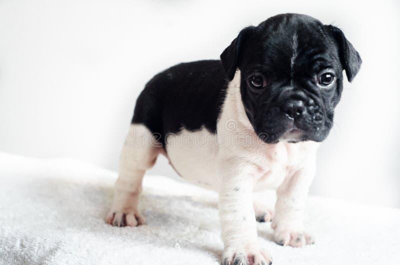 Śliczny psi studio strzał zdjęcia stock