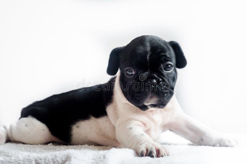 Śliczny psi studio strzał zdjęcie stock