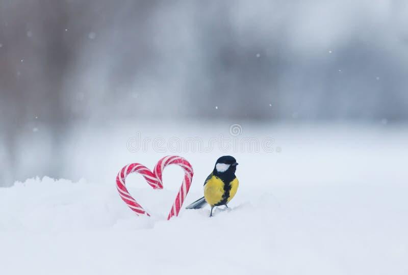 śliczny ptasi tit obsiadanie na słodkich czerwonych cukierków lizakach w formie serca w białym śniegu na świątecznym walentynka d fotografia stock