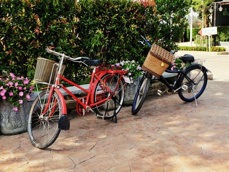Śliczny rocznika stylu bicykl w ogródzie fotografia royalty free