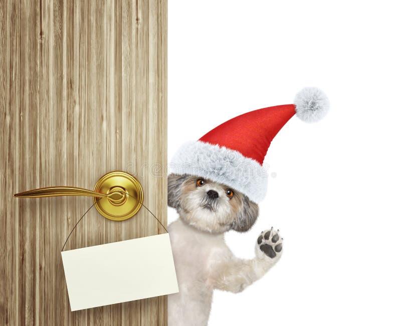 Śliczny shitzu pies w czerwony bożego narodzenia Santa Claus kapeluszowy przyglądającym out drzwiowy wejście z pustą kartą w domu zdjęcie royalty free